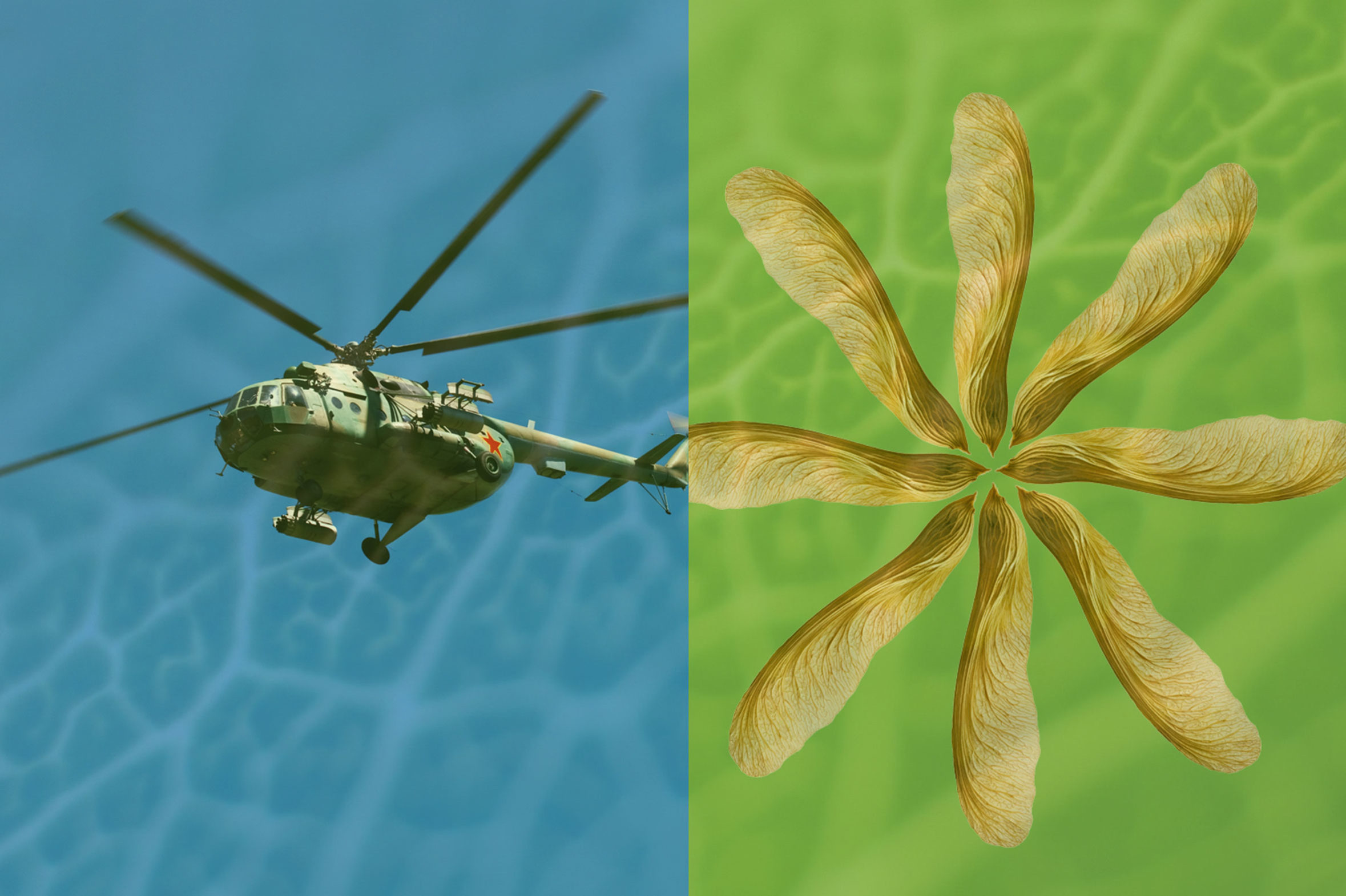 helicopter wings inspired by oak tree seeds