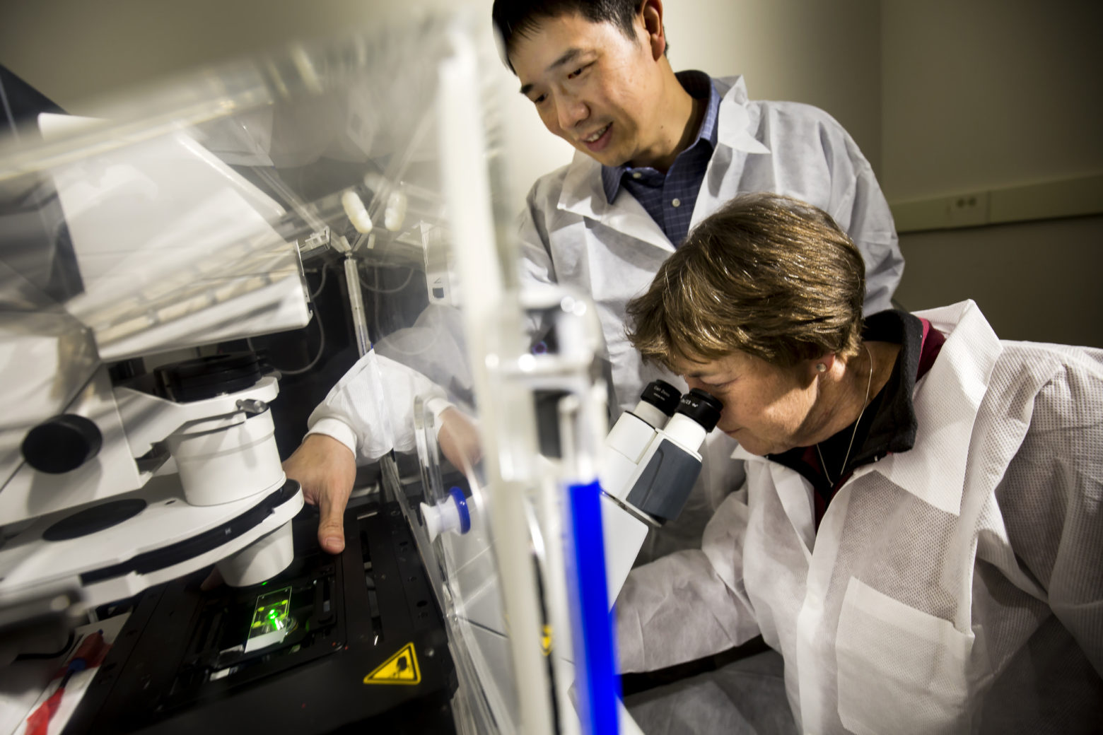 Deborah Gumucio, James Douglas Engel Collegiate Professor of Cell and Developmental Biology, and Jianping Fu, Associate Professor of Mechanical Engineering, discuss microscopic results of cysts they are analyzing from a cell culture. Photo: Joseph Xu, Michigan Engineering.