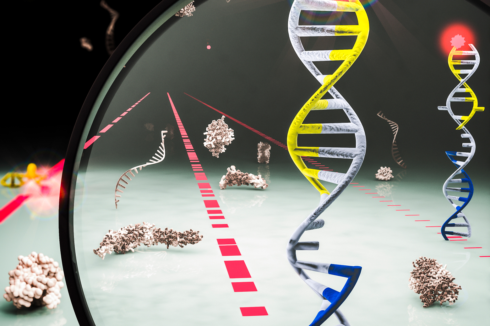 In this illustration, the red, blue and black strands represent different microRNAs that, in the new technique, attach and detach to DNA, which is gray in the image.