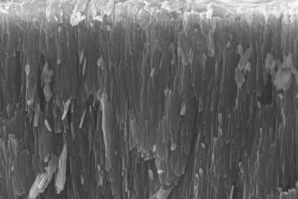 Microscopic image of tooth enamel