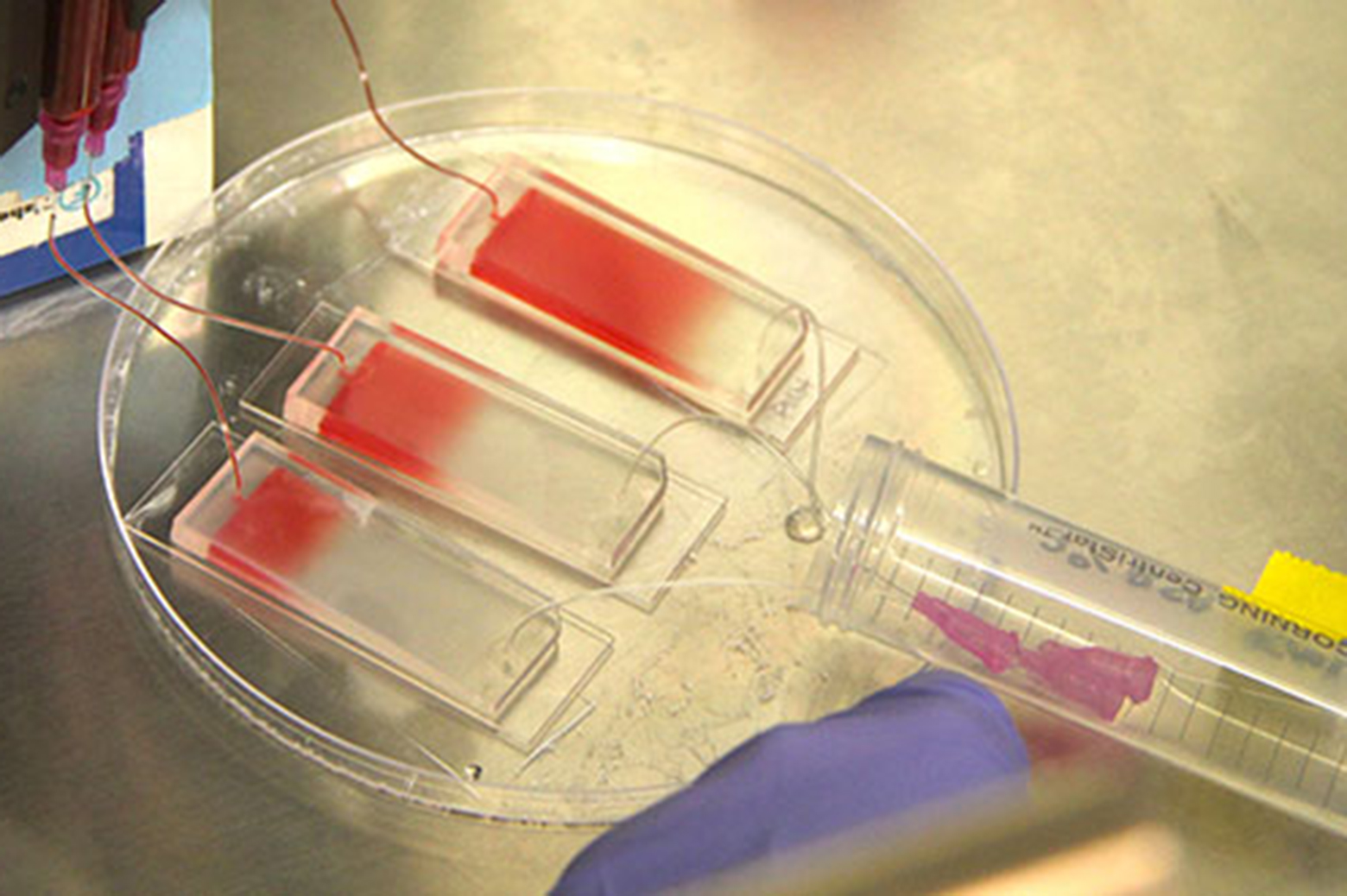 A blood sample is pumped into a microfluidic chip as part of the microfluidic co-culture process