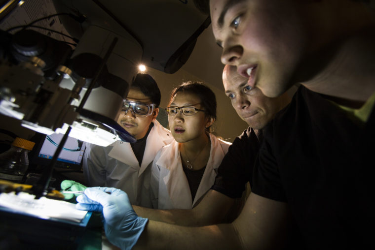 A photograph of Tim Bruns, Assistant Professor of Biomedical Engineering and his students, observing the buccal mass of the apysia California sea slug.