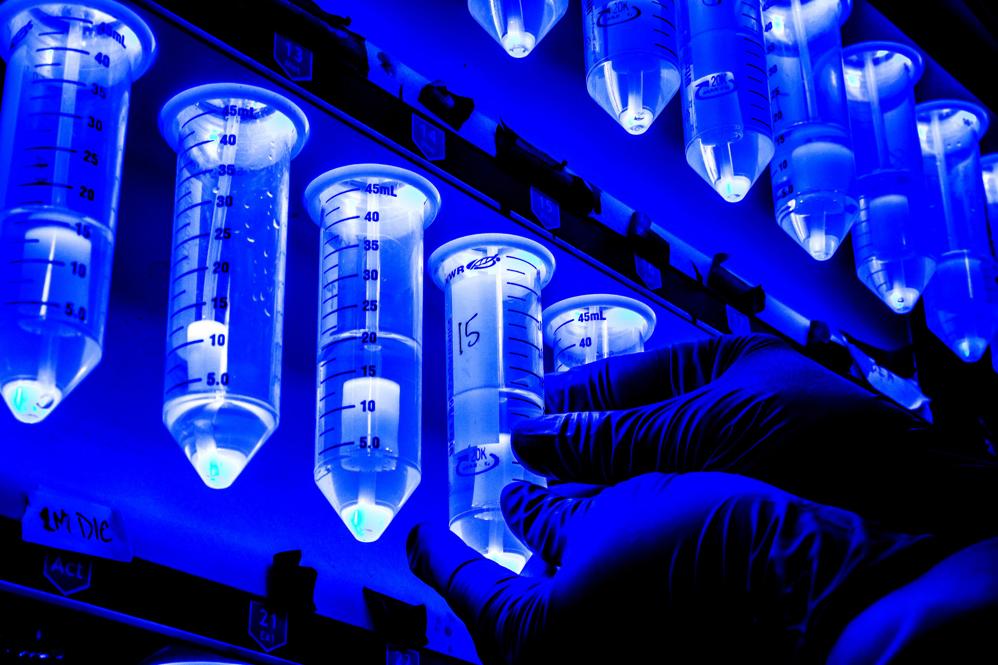 A photograph of protein synthesis test tubes.