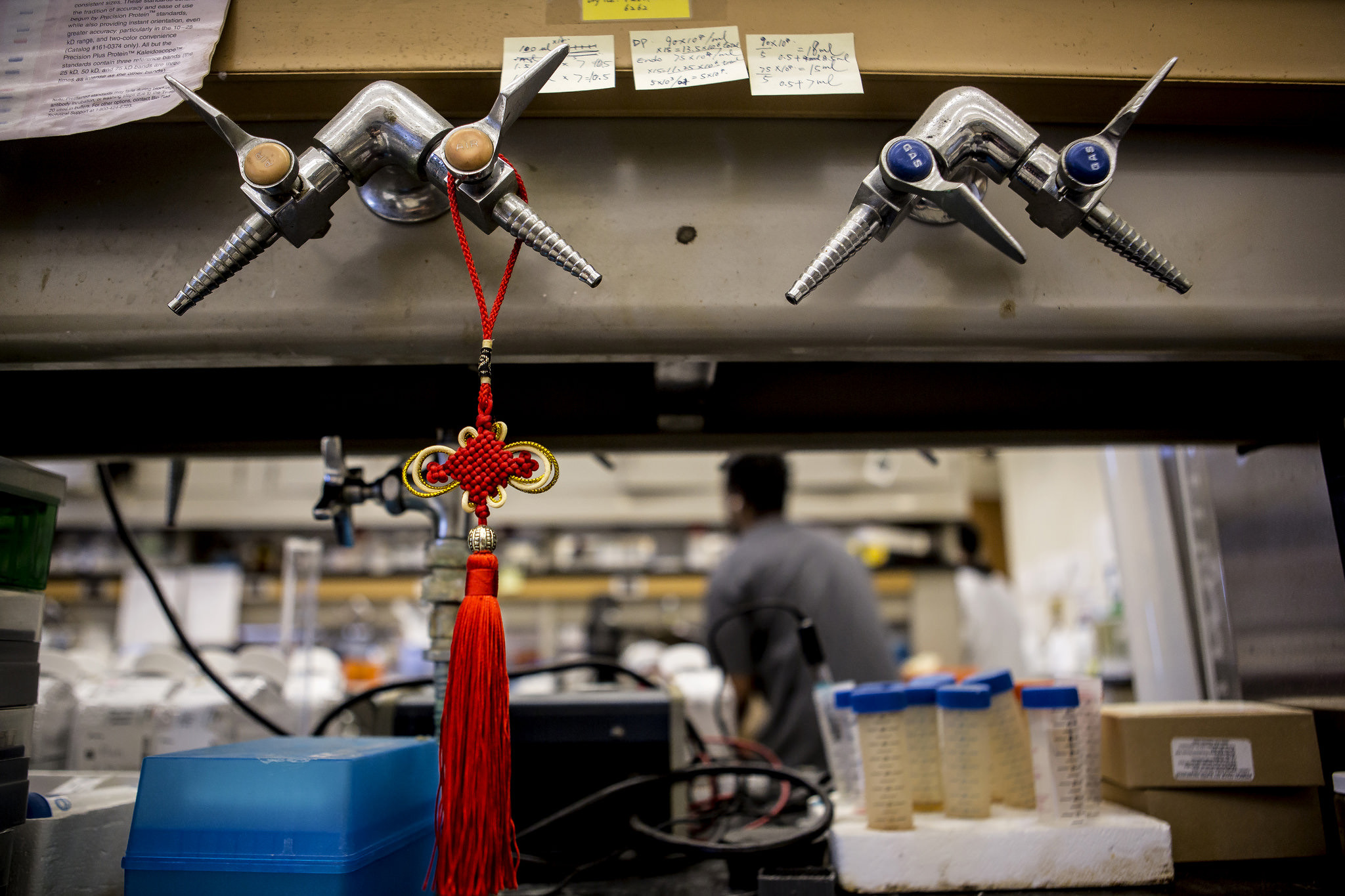 A photograph of a Pan Chang knot hanging in BME Professor Peter Ma's laboratory.