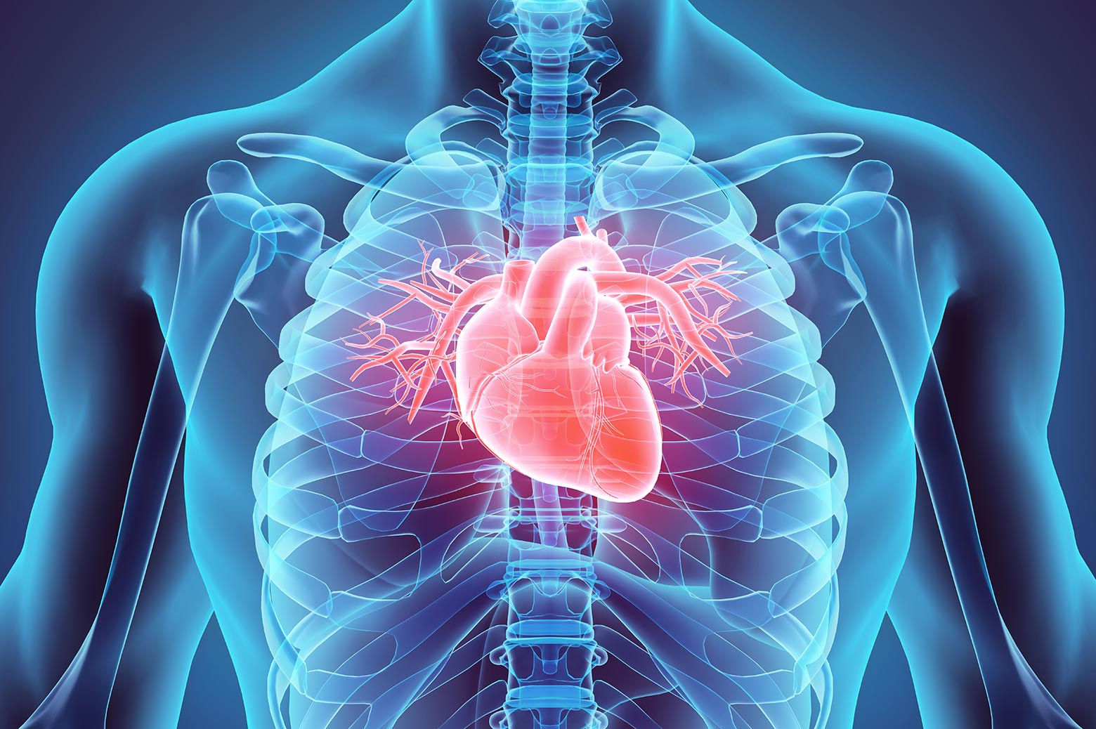 Bionic heart tissue: U-Michigan part of $20M center – The Michigan ...