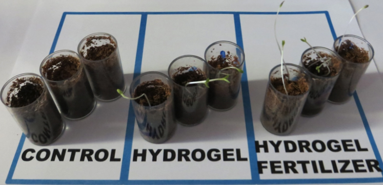 hydrogel lettuce samples