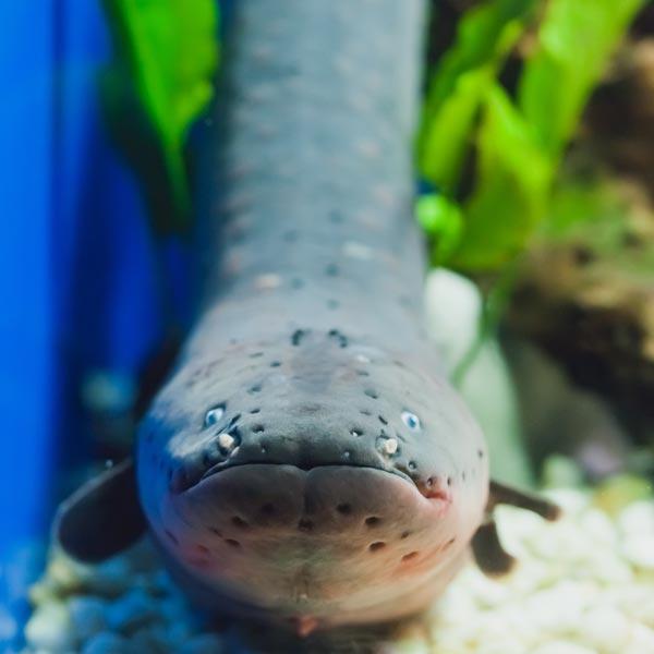 Eel held by researcher