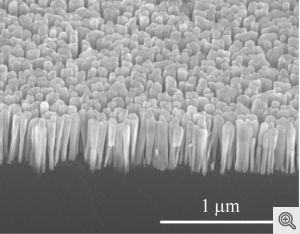 nanowires growing from silicon