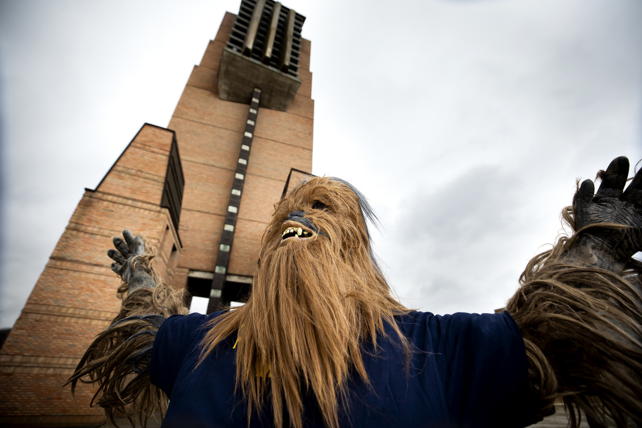 A photograph of a person dressed up as Chewbacca on North Campus.