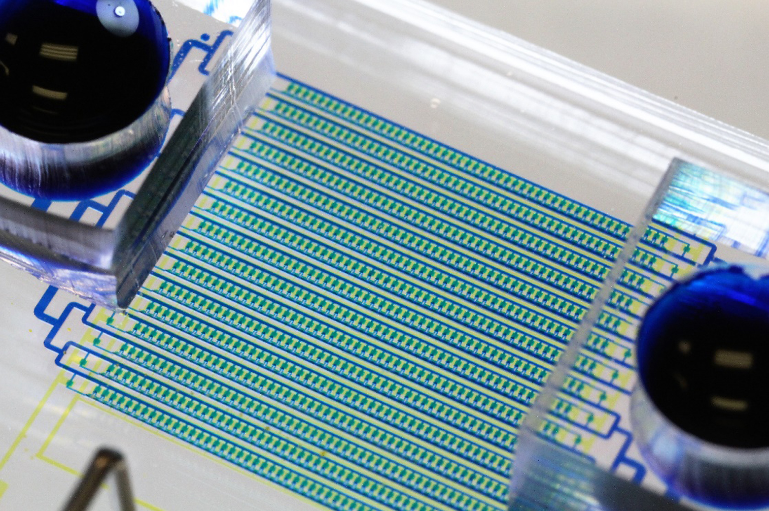 A new microfluidic chip designed to catch circulating tumor cells