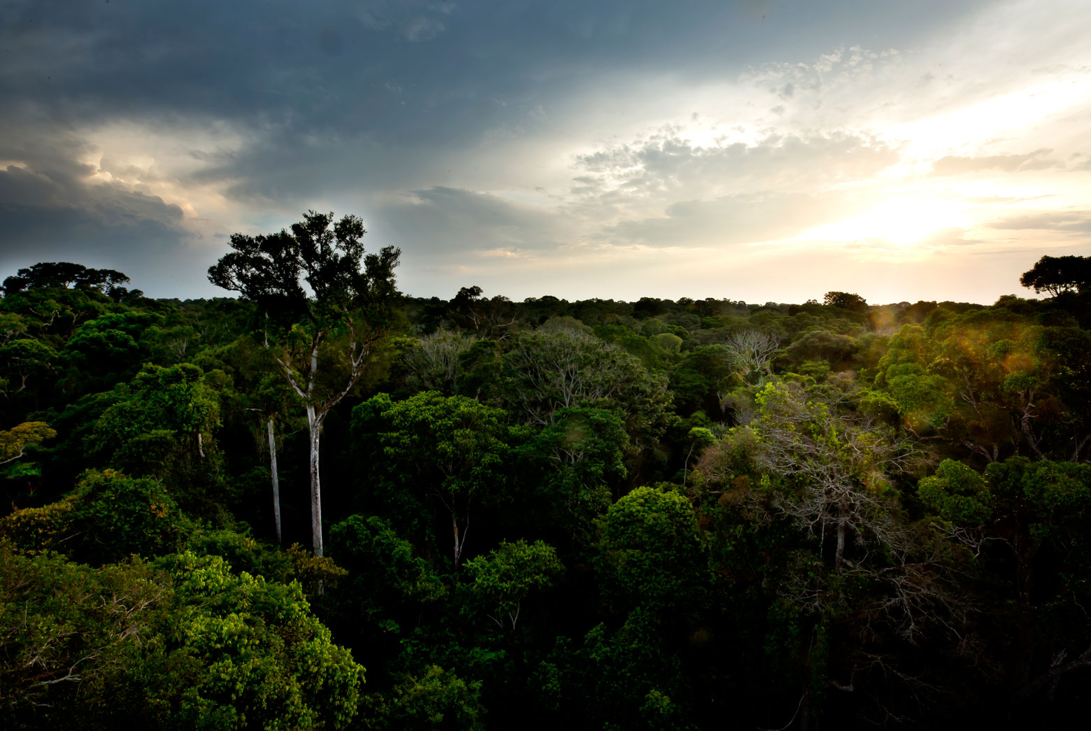 Above the canopy of the Amazon rainforest.