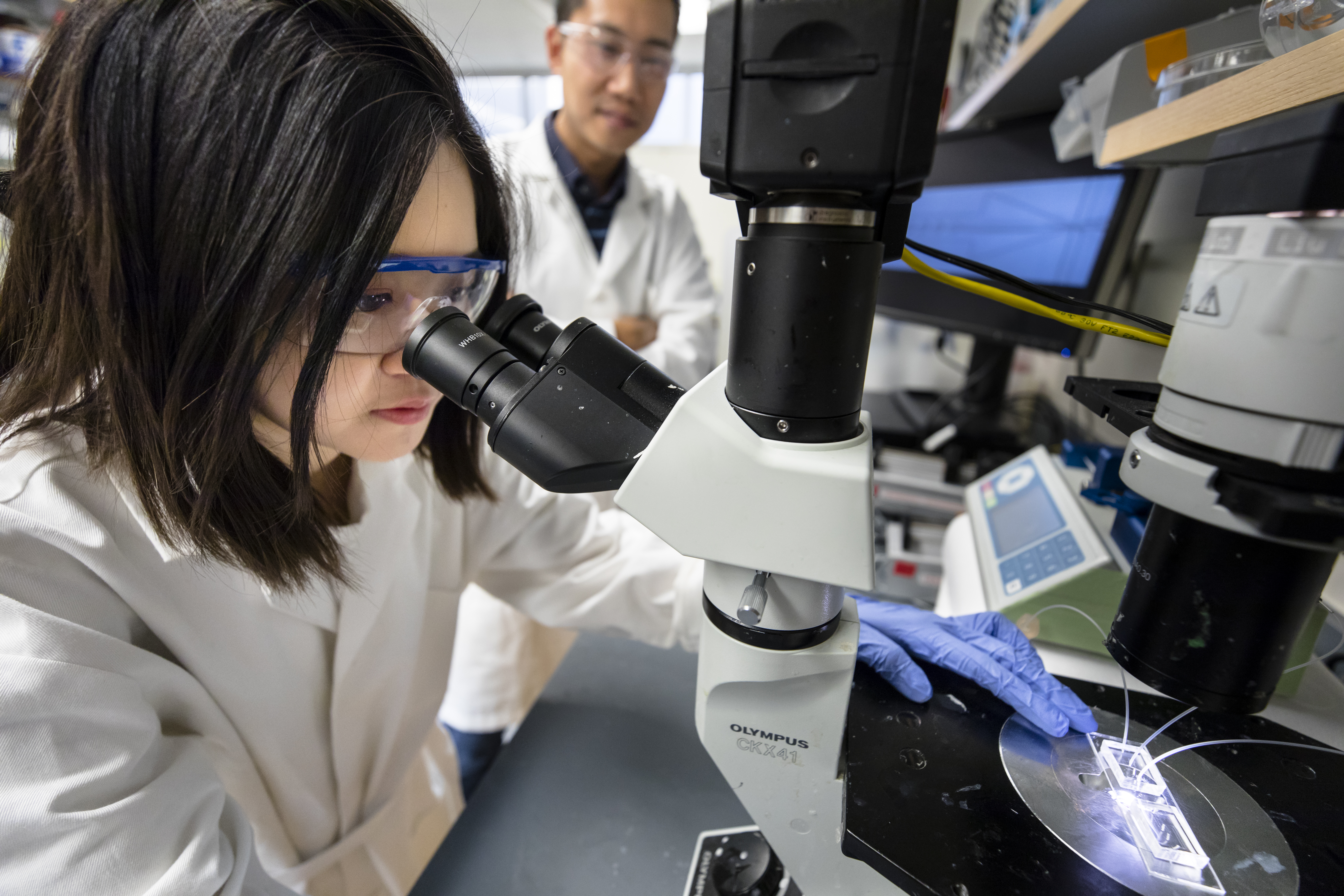 Female scientist looks into a microscope