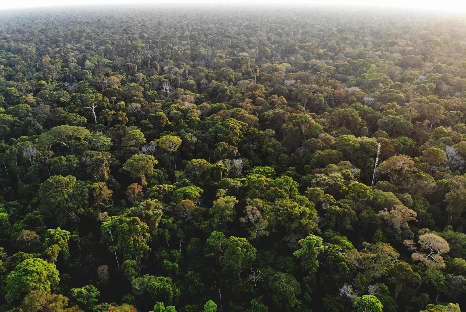 A view from overhead of the Amazon forest