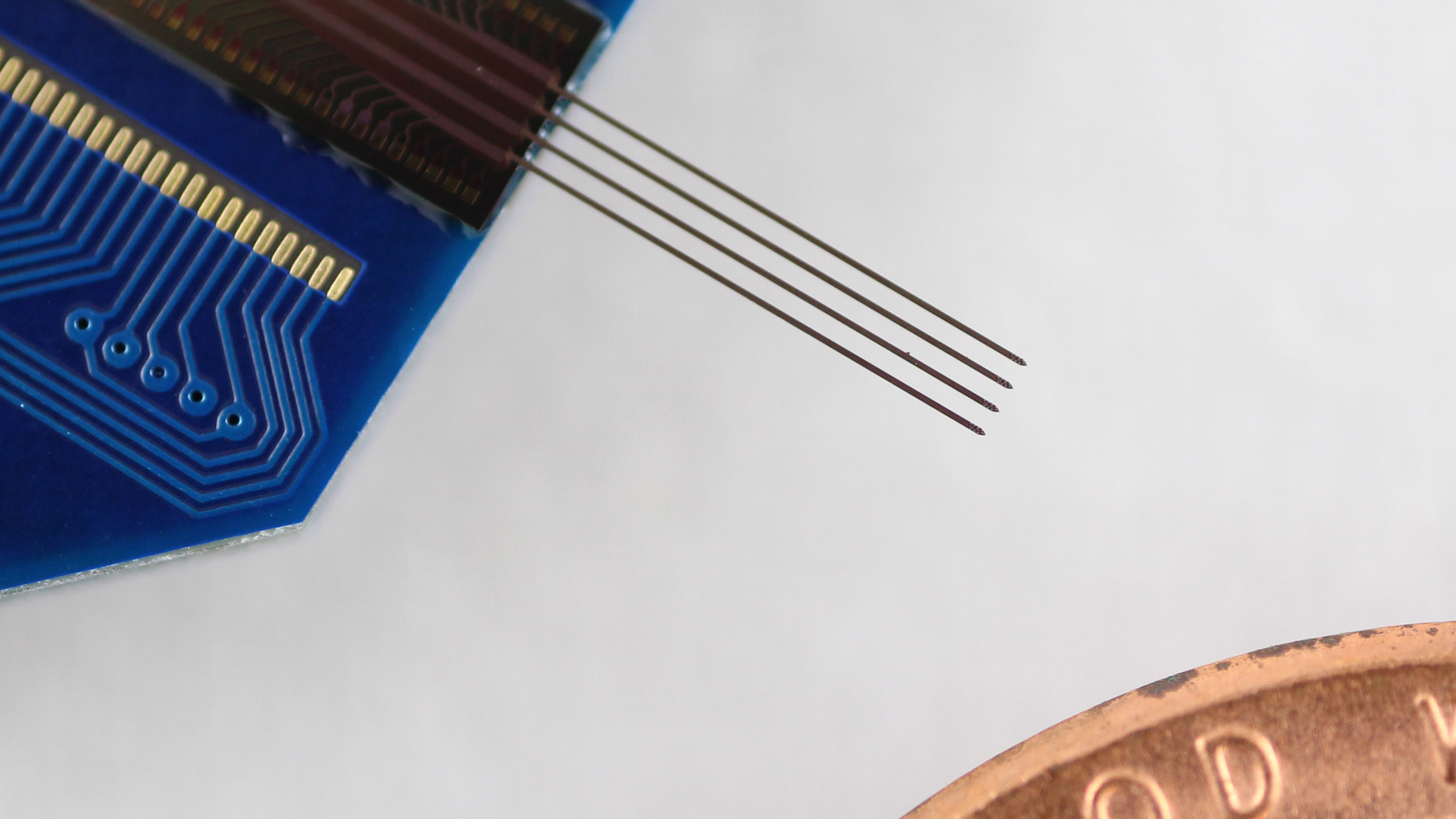 A four-shank probe, with each prong just 0.07 millimeters across, next to a penny for scale.