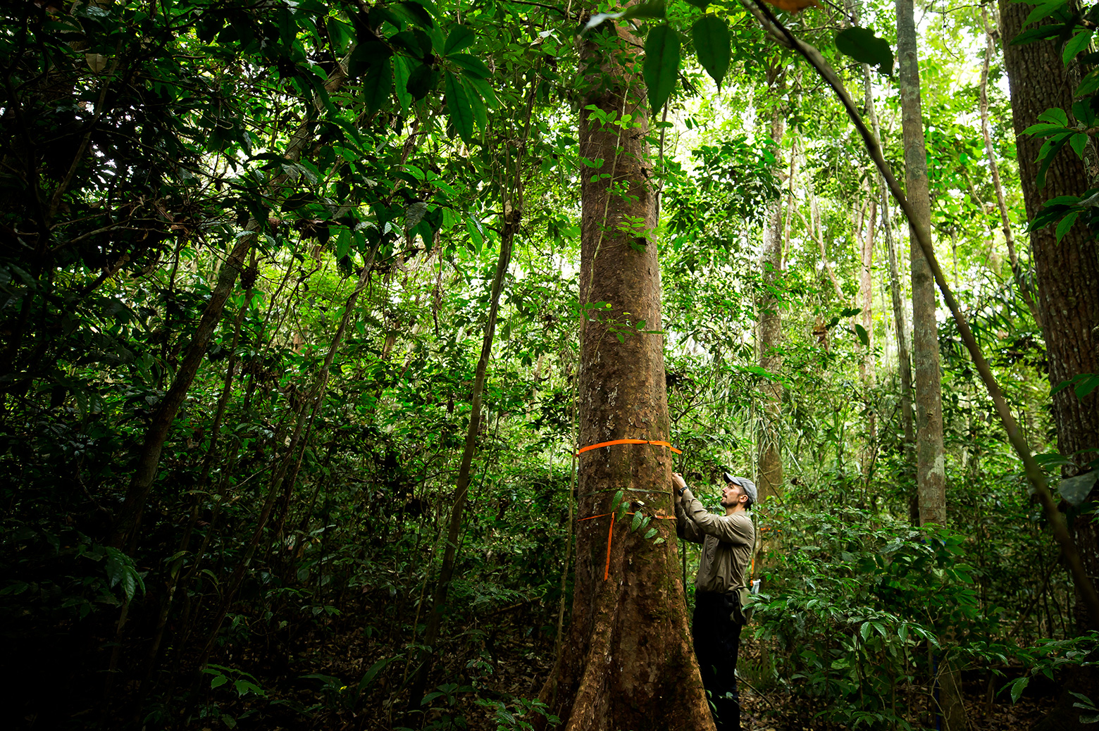 Ivanov checking sensors in the rainforest