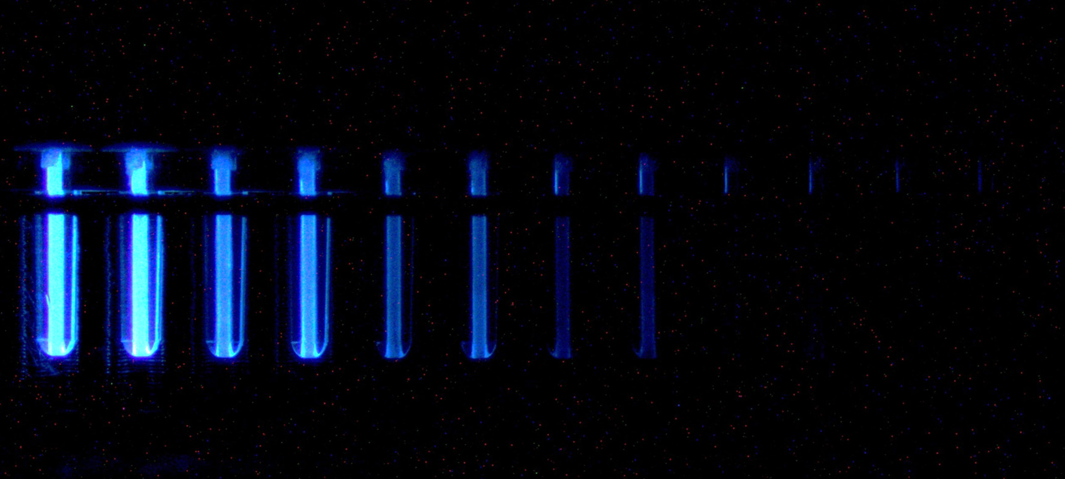 An example of the chemiluminescent imagery used to measure the concentration of SARS-CoV-2 antibodies in the convalescent plasma of COVID-19 donors using a microfluidic ELISA assay.